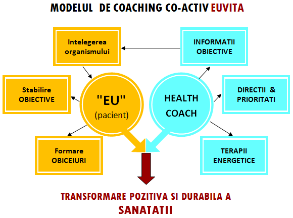 model coaching EUVITA